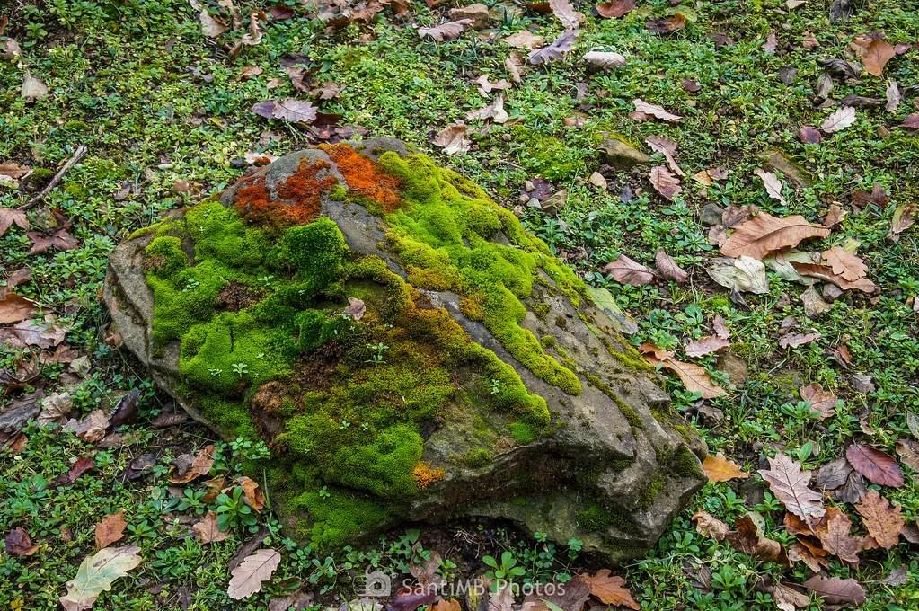 Piedra camuflada