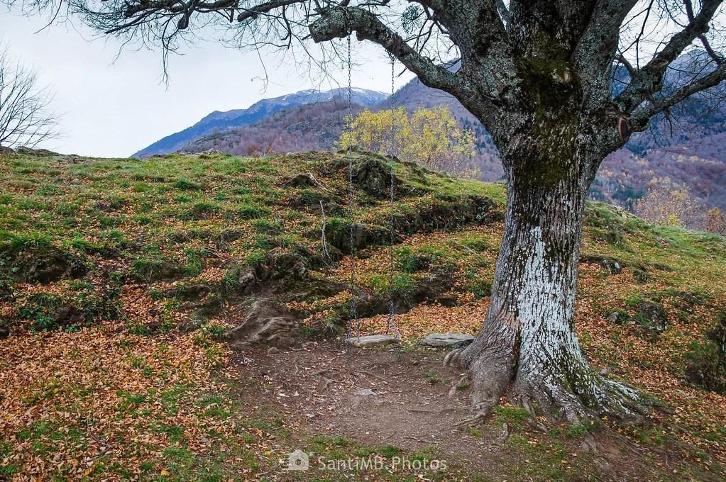 El árbol del columpio