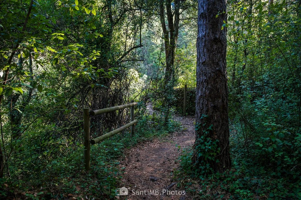 El fresco bosque