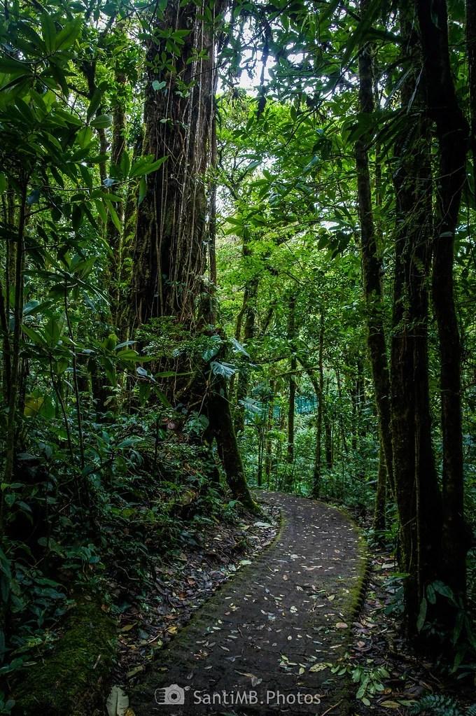 El pilar del bosque