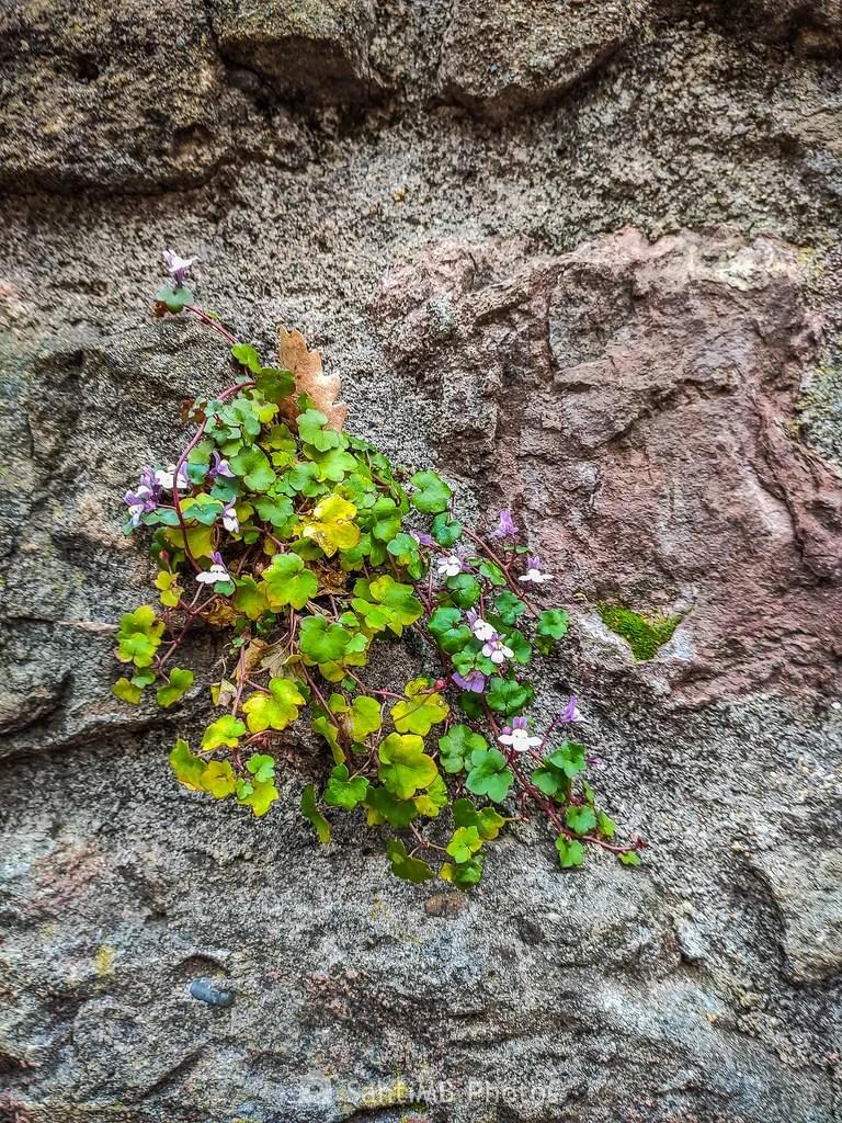 En la pared