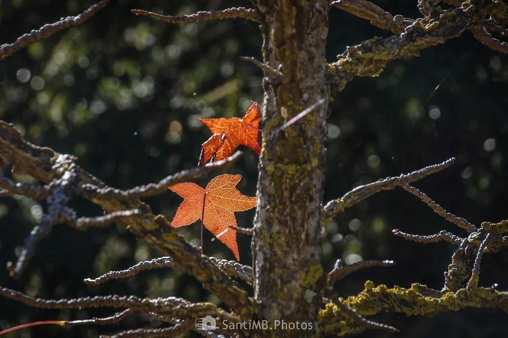 Las últimas hojas