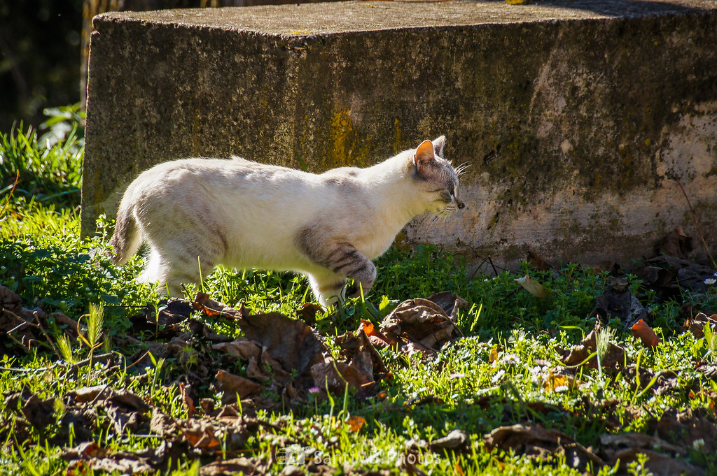 Gato a 3 pies