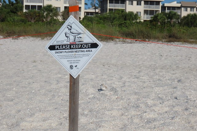 First Enclosure Goes Up for Snowy Plover Nesting Season