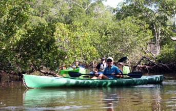 Tarpon Bay Explorers is now offering some of their guided tours. Kayak, SUP and Nature Boat tours are offered 7 days a week.