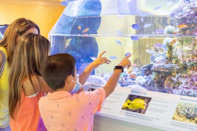 National Shell Museum Updates Flagship K-12 Educational Platform