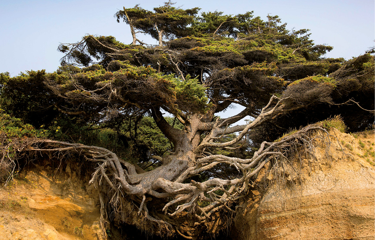 Árvore resiliente