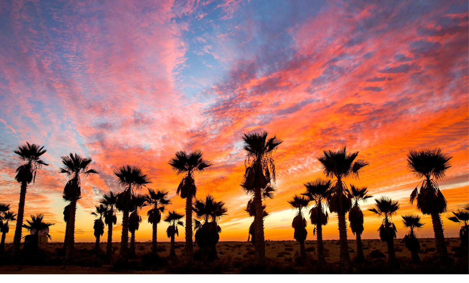 O pôr do sol atrás das palmeiras perto de Mifrasit, no deserto do Negev, perto da fronteira israelo-egípcia, 03 de janeiro de 2018. EPA / JIM HOLLANDER