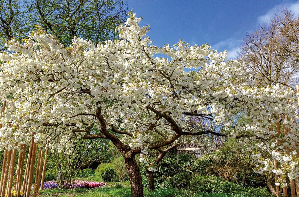 A pujança da primavera, foto MSA / DINO