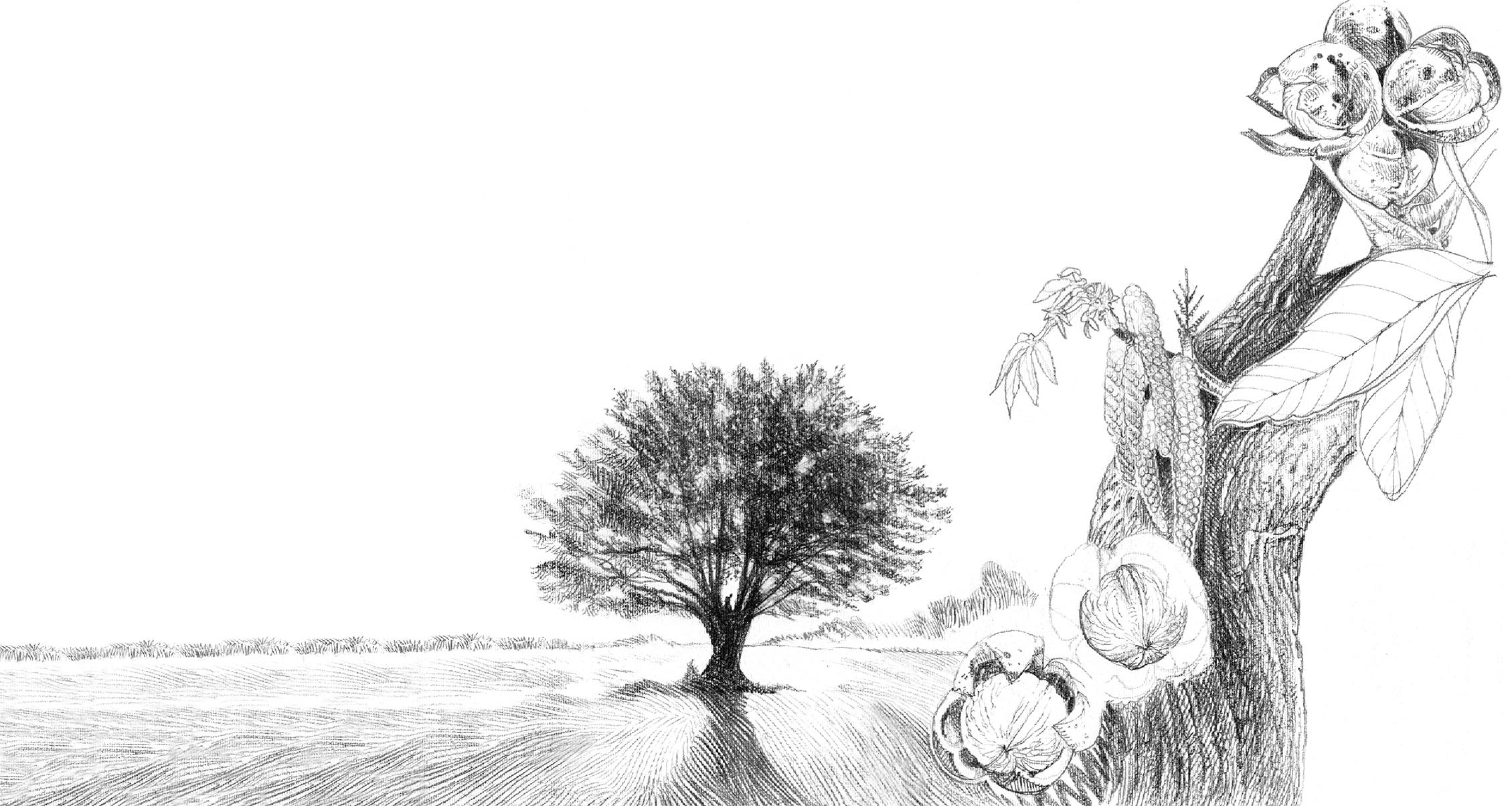 Um passeio no bosque, ilustração de Luca Salvagno