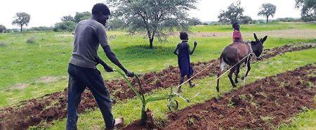 Os arados entregues pela Caritas Antoniana são armas contra a pobreza e o conflito. São sementes de liberdade espalhadas na boa terra.