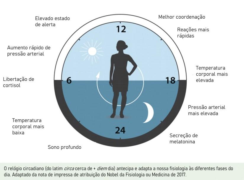 O relógio circadiano (do latim circa + diem - cerca de dia) antecipa e adapta a nossa fisiologia às diferentes fases do dia. Adaptado da nota de imprensa de atribuição do Nobel da Fisiologia ou Medicina de 2017.