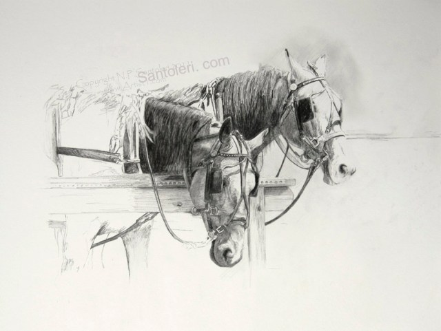 Prints of Amish Horses Study pencil drawing 2011 by Santoleri