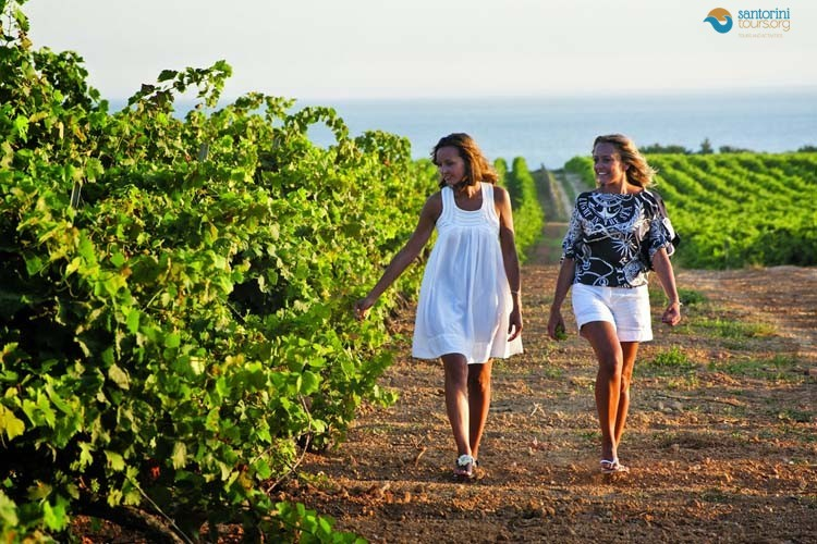 WINE TOURISM IN SANTORINI