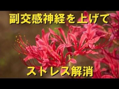 『副交感神経を上げてストレス解消』ショパン:前奏曲 第15番 変ニ長調 Op.28 「雨だれ」