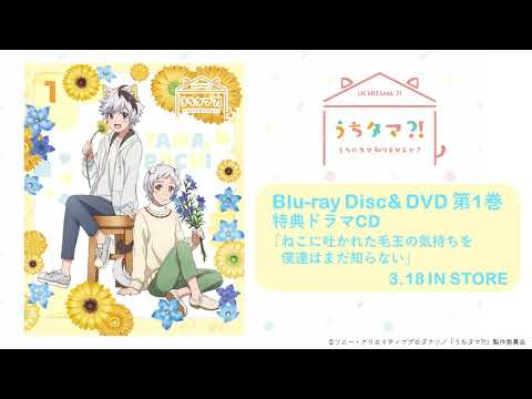 TVアニメ「うちタマ⁈ ~うちのタマ知りませんか?~」 Blu-ray&DVD1巻特典 オリジナルドラマCD「ねこに吐かれた毛玉の気持ちを僕達はまだ知らない」試聴