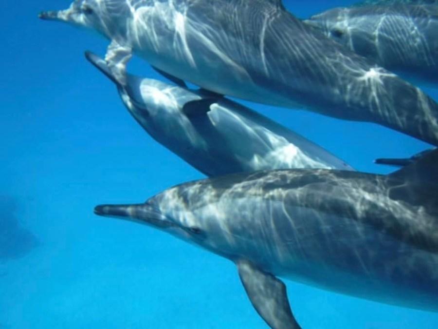 Dolfijnen in de zee