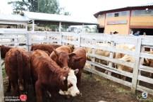 Sindicato Rural_2018 (43)