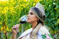 Vinícola Suzin - Vindima (25)