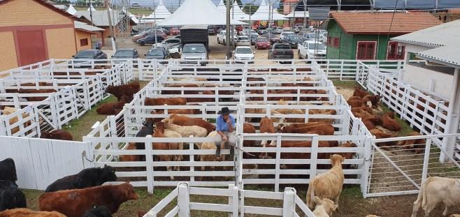 Feira_Sindicato Rural (3)