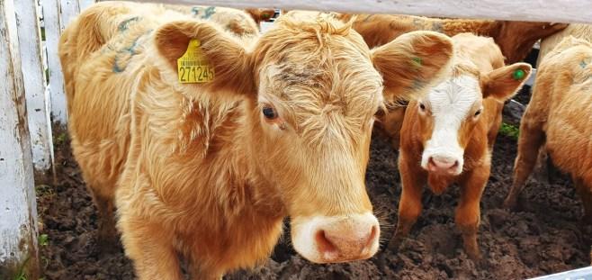Sindicato Rural 2019 - Feira (61)