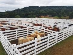Sindicato Rural 2019 - Feira (67)