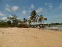 Caju-Una, Ilha do Marajó.