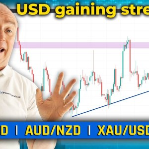 Is USD Gaining Strength?! Discussing EUR/USD, XAU/USD & More! (Forex Forecast)