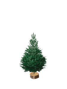 site nordmann 100-125 V2 sapin bio de Noël