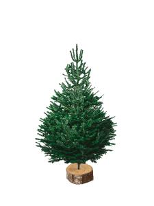 nordmann 125-150 sapin bio de Noël