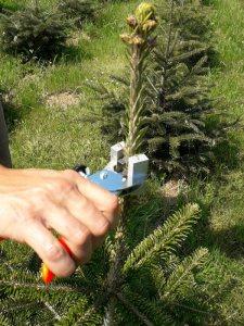 cerclage 3 sapin bio de Noël agriculture biologique