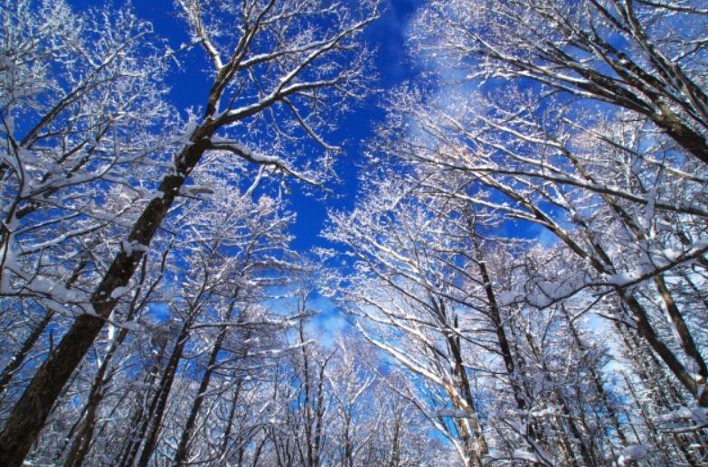 青空と雪、木々