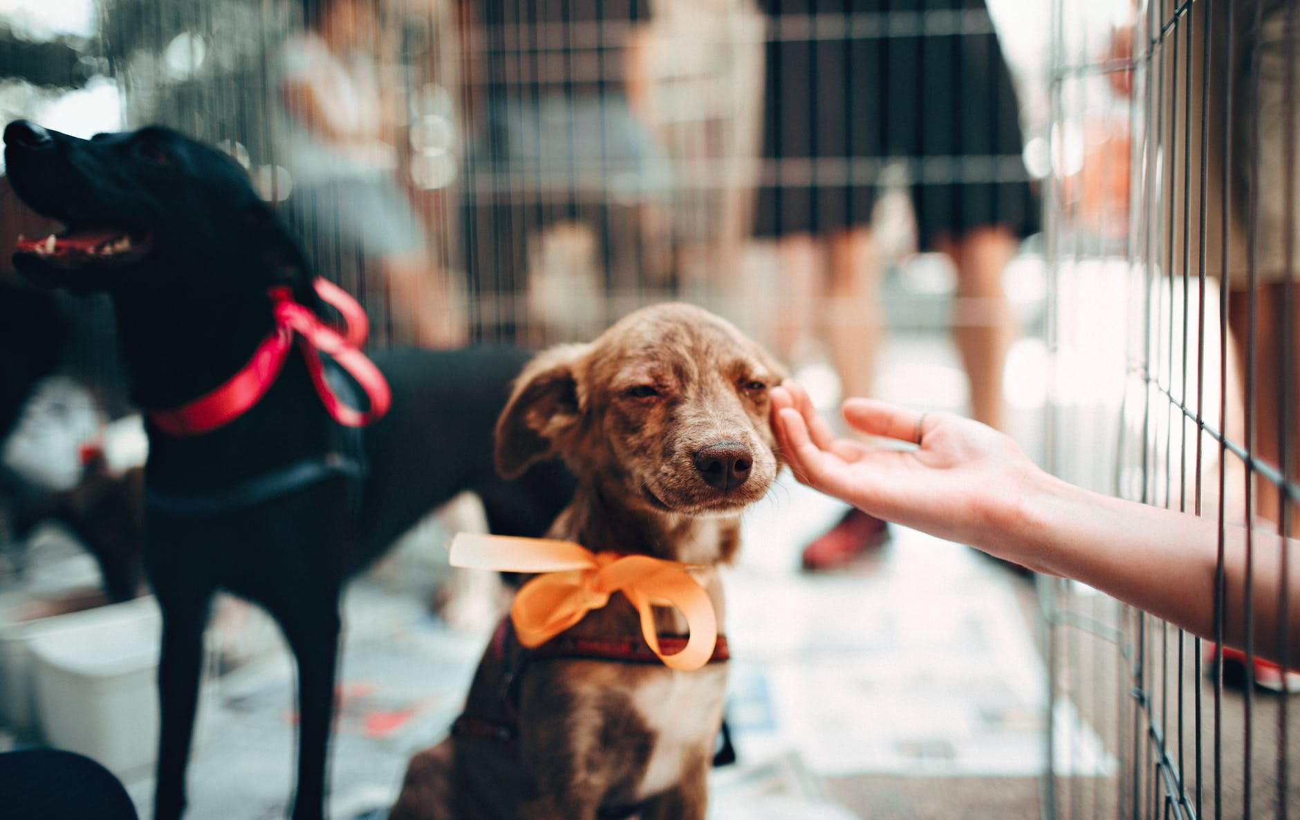 """Photo by Helena Lopes on <a href=""""https://www.pexels.com/photo/person-touching-brown-puppy-1904105/"""" rel=""""nofollow"""">Pexels.com</a>"""