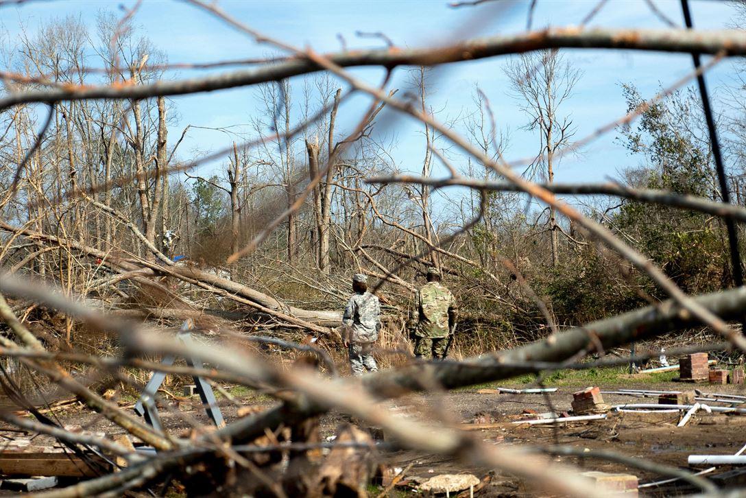 tree-debris-cleanup