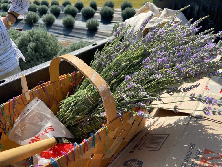 Local lavender farm finds footing and flourishes amid a pandemic