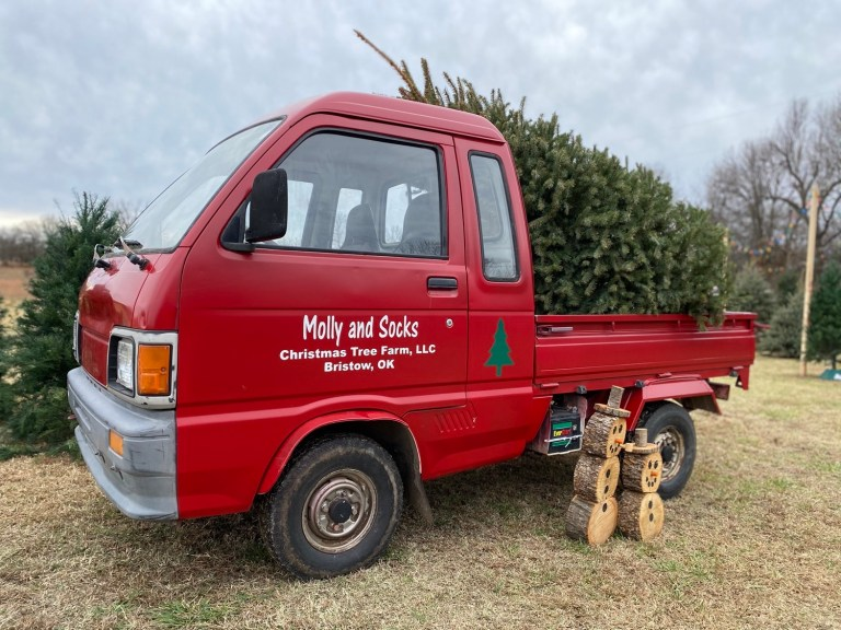 Bristow Christmas tree farm thrives on the old-fashioned Christmas experience