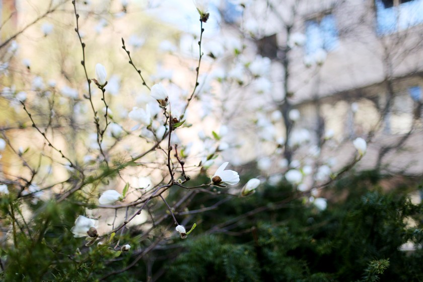 en leverans av ett vårs arbete kärlek i kvadrat och blommorna på vägen mellan sofia & jag