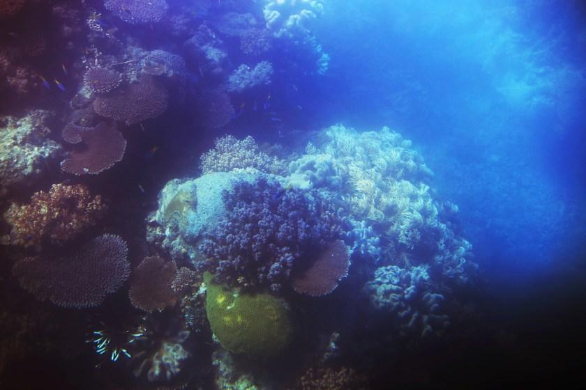 korall stora barriärrevet - sara edström28