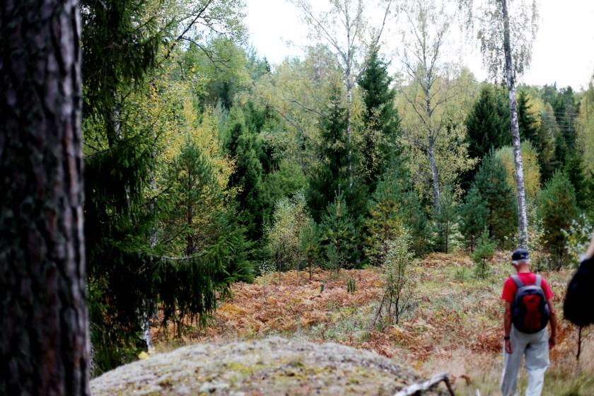 söndag i skogen25