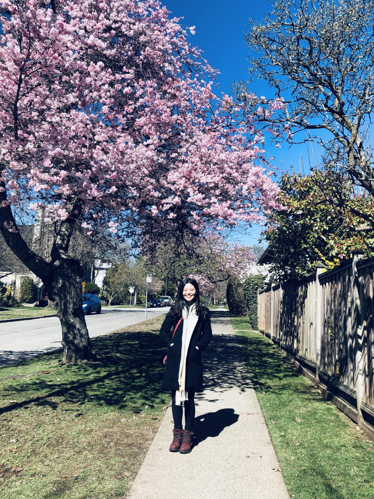 2019溫哥華最浪漫的季節 來去尋找櫻花-賞櫻地圖、櫻花節活動