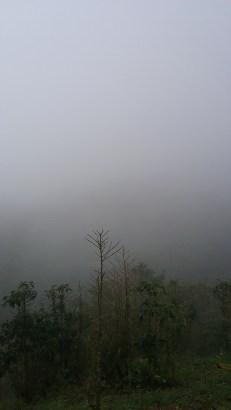 Fog at the farm