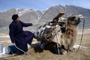 TuvaMann_bepackt_Kamel_Altai