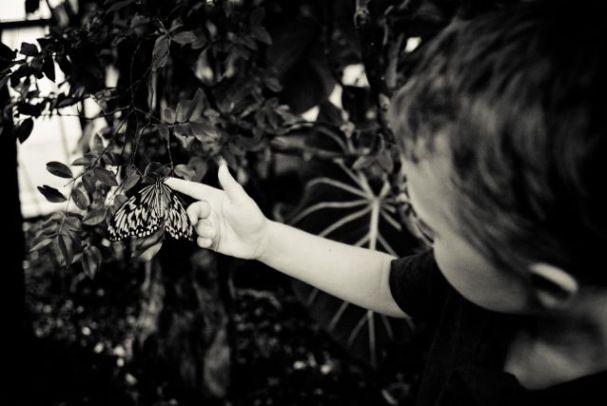 Butterfly Hand Boy