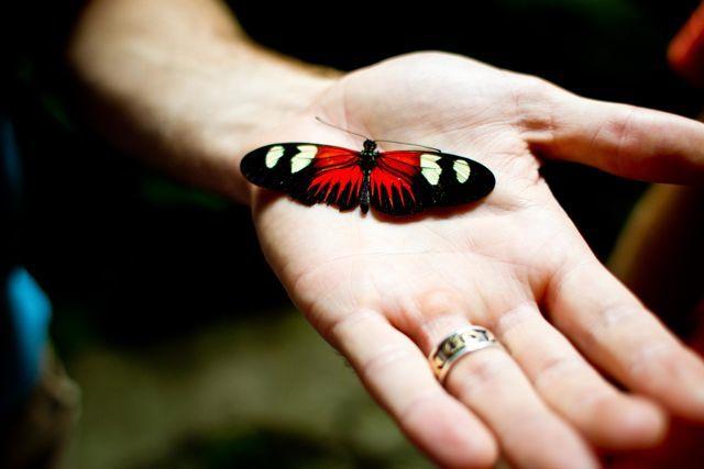 Hand Butterfly Cherish