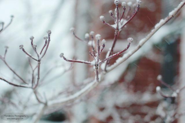 Winter BranchMJ