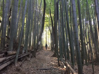 Quiet bamboo forest behind our Kawasaki apartment.