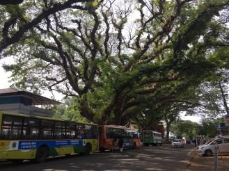 Sprawling, larger than life trees.
