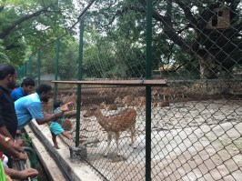 People enjoying/teasing the animals.