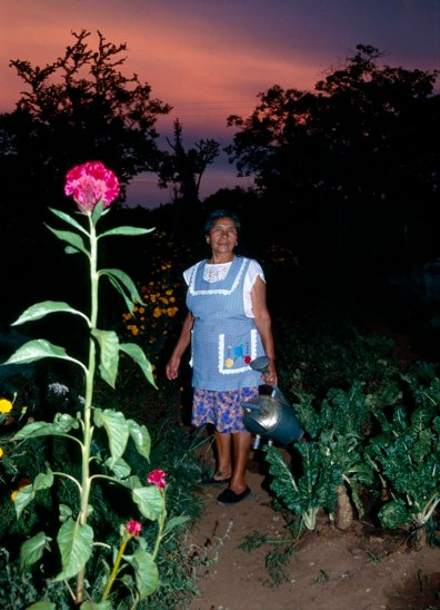 Woman on her organic allotment, Oaxaca, Mexico