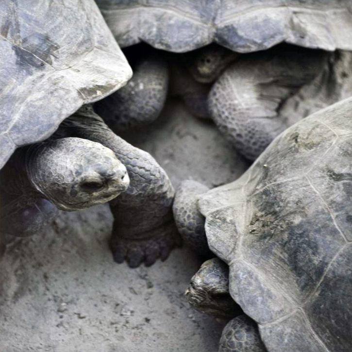 Turtles - 2005 - 10 x 10 - Chromogenic Print